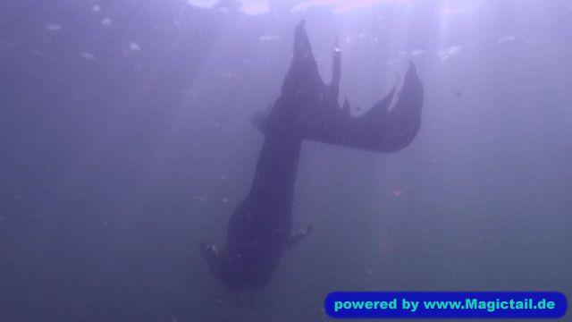 meerjungfrau-live.de Meerjungfrau Natalie:Mystic Mermaid-Meerjungfrau Natalie